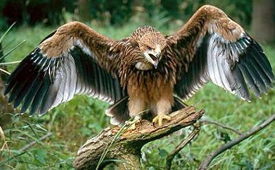 PK Bird