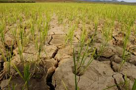 N. Korea hit by worst drought in 100 years
