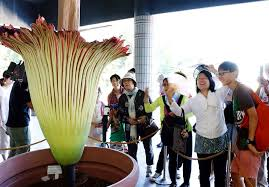 World's largest flower blooms in Tokyo park
